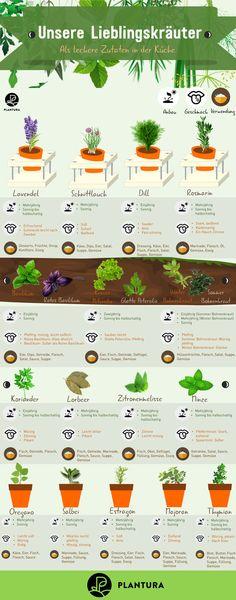 Kräuter trocknen, einlagern & Co.: 8 Tipps zum Konservieren - Plantura Our favorite herbs - As a delicious ingredient in the kitchen: You can find out