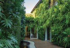 Paisagismo com muros verdes - Paisagismo - Plantas, Flores e Jardins