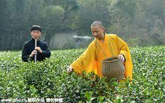 Monks perform tea-picking ritual in Hangzhou