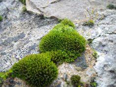 As briofitas,são muito diversificada em suas adaptações, para absorção da água,mais algumas são capazes de tolera a deficiência hídrico.São capazes de armazenar grandes quantidades de água após a chuva ou de orvalhos.