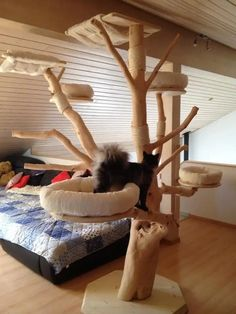 Gatos Maine Coon, Maine Coon Cats, Diy Cat Tree, Cat Trees, Siberian Cats For Sale, What Cats Can Eat, Small Spa, Cat Run, Cat Furniture
