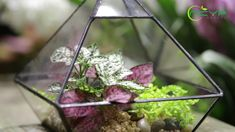 geometric  terrariums Terrarium Containers, Glass Terrarium, Small Potted Plants, Air Plants, Flower Pots, Flowers, Planter Ideas, Ceramic Planters, Floating Frame