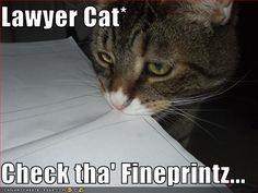 oh lawyer cat!