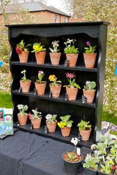 15 April 2015 - Kent Alpine Gardener's Diary - Gardeners' Diaries - Alpine Garden Society