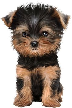 Dogs drawing cartoon puppys 50 ideas for 2019 Cute Dog Drawing, Cute Animal Drawings, Cute Drawings, Cute Dogs And Puppies, Baby Dogs, Yorkie Puppy, Teacup Yorkie, Dog Illustration, Cute Little Animals