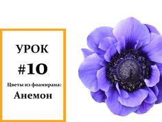 Анемон мастер класс, Фоамиран цветы, Мастер класс из фоамирана Foam Flou...
