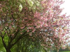 Blossom on the tree you know how I feel.......