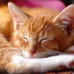 Ever listen to a cat purr? It is one of the most delightful sounds. Children often squeal when they hear it. - FamilyCircle.com