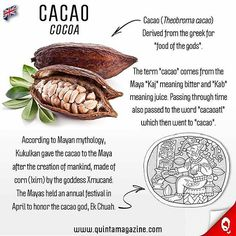 @Regrann from @quinta_magazine - 🇬🇧 Cacao (Cocoa)• #infographic 🍫🍪🍩🇲🇽 #cacao #gastronomicculture  #mexicanfood #foodie #original #originaldemexico #gastronomia #maya #cocoa #chocolate #food  #delicious #seeds #seed #vegetal #gourmet #vegetarianfood #vegan #veggie #vegetarian #vivamexico #mexico - #regrann