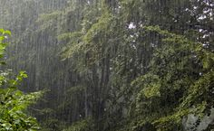 Think about this when it rains in your backyard. Types Of Precipitation, Global Weather, Pennies From Heaven, Smell Of Rain, I Love Rain, Rain Photography, White Photography, Rain Storm, Nature Sounds