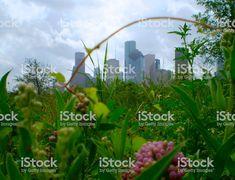 August 2017 - Framed view of downtown Houston skyline from Buffalo. Houston Skyline, Park, Frame, Green, Picture Frame, Parks, Frames