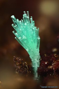 Olivenite. Mine-132, Kamariza, Lavrio, Grèce FOV=2 mm Collection Vasilis Stergiou / Photo Tóth László