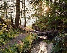 58 Chemins des Bisses Country Roads, Plants, Paths, Switzerland, Flora, Plant