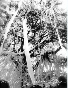 Toomers Trees