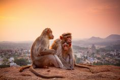 On a hilltop, alone with this adorable Macaca family watching the sunset. Felt like the first real sunset in my life.