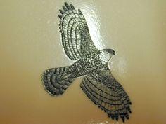 Falcon Hawk Tattoo Designs