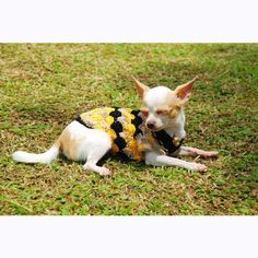 Myknitt Hand Crochet Black Yellow Flower Blossom Cute Adorable Pet Clothing Puppy Sweater Dk823 Free Shipping *** Click on the image for additional details. (This is an affiliate link and I receive a commission for the sales) #Dogs