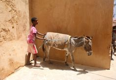It turns out that being sat onto the back of a donkey for a ride around Lamu isn't exactly everybody's idea of a good time. We were on our way, by boat, from Shela to Lamu, when the guide came up with the brilliant suggestion that the kids might like ride a donkey around town …
