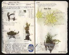 Seaweed Kisses: The Journal Diaries- Kolby's Hiking Journals