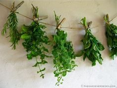 Dried Herbs Add Great Flavor to Teas, Sauces, Soups and Many Savory & Sweet Dishes. Preserve the Best Flavor by Cutting Fresh, First Thing in the Morning, Sorting and Bundling Before Hanging to Dry – Easy Tutorial Post,