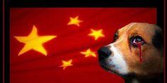 Stop yulin 2015
