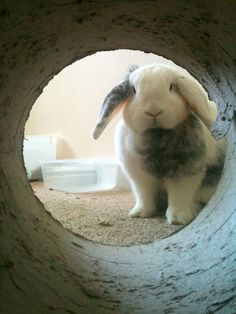 I'm always trying to trick Blackjack into tubes, but he remains skeptical that they're a good idea, unlike this bun.