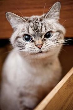 O que vc acha eu pareço o gato risonho!?