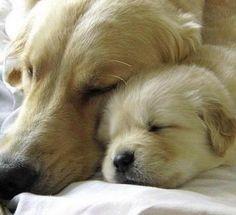 Mamma Love.