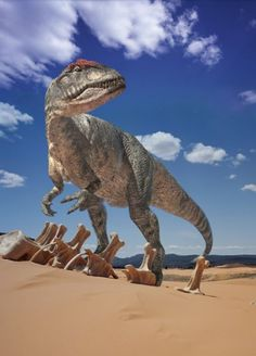 Allosaurus, a carnivorous theropod dinosaur from the jurassic and top predator of its time. It was an agile and flexible hunter with teeth designed to slice flesh and claws able to cling onto larger prey while hunting