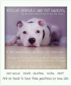 Rescue animals are not broken. Rescue Dogs, Animal Rescue, Animal Adoption, Animal Shelter, Pitbull Animal, Pitbull Adoption, Black Pitbull, Dogs Pitbull, Pitbull Terrier