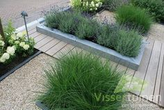 mixture of decking and shingle Strakke & Robuuste voortuin Front Gardens, Small Gardens, Outdoor Gardens, Modern Landscaping, Backyard Landscaping, Landscaping Software, Growing Lavender, Garden Architecture, Plantation