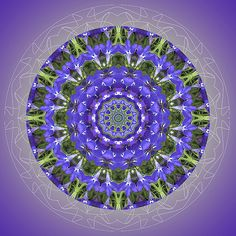 Violet Vibration - The color violet heightens our awareness and helps us give our very best.