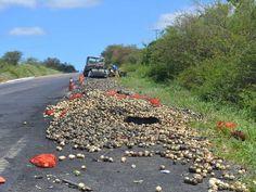 Caminhão que foi atingido por carro levava cebolas na Bahia (Foto: João Carvalho/Portal Jaguarari.com)