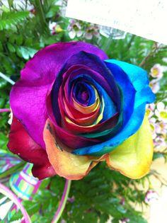 look a rainbow rose!!