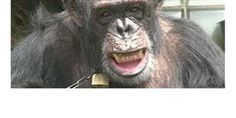 Chimpanzees Belong in Sanctuaries - Not Cages PETITION - Care2 News Network