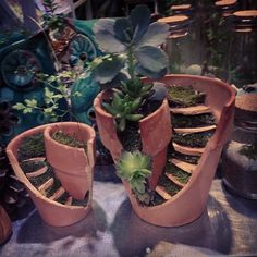 How to turn your broken pots into brilliant mini-gardens