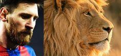 Lionel Messi jak lew, czyli dobre porównanie Argentyńczyka na boisku piłkarskim • Memy piłkarskie na FunFootball.pl • Wejdź i zobacz #messi #lionelmessi #football #soccer #sports #pilkanozna #futbol #sport #memy #memes