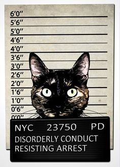 """Kitty Mugshot Greeting Card for Sale by Nicklas Gustafsson. Our premium-stock greeting cards are 5"""" x 7"""" in size and can be personalized with a custom message on the inside of the card. All cards are available for worldwide shipping and include a money-back guarantee."""