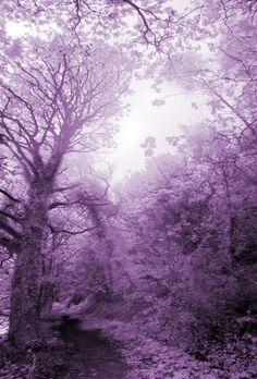 Calderdale woods via Kaite. Gorgeous!