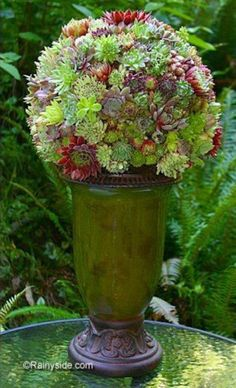 Succulent Plant Balls —A DIY on how to make one. Succulents make great topiary. Succulent Gardening, Cacti And Succulents, Planting Succulents, Planting Flowers, Organic Gardening, Unique Gardens, Beautiful Gardens, Beautiful Flowers, Small Gardens