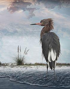 Art of Birds – Les superbes photographies d'oiseaux de Cheryl Medow