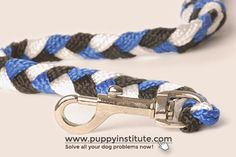 Choosing the best dog training collar for your dog Leash Training, Best Dog Training, Training Collar, Different Types Of Dogs, Dog Leash, Best Dogs