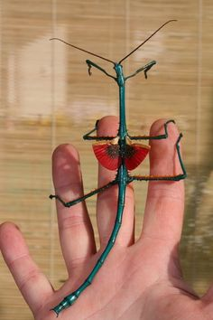 Madagascar giant jumping stick insect (note the dragon like wings).