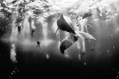The annual National Geographic Traveler Photo Contest was announced today. Selected from more than entries, a photograph of divers swimming near a humpback whale has won the 2015 National Geographic Traveler Photo Contest grand prize. National Geographic Photo Contest, National Geographic Travel, Epic Photos, Cool Photos, Inspiring Pictures, Funny Pictures, Willy Brandt Haus, World Press Photo, Concours Photo