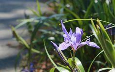 A Leisurely Stroll Through the SF Botanical Garden in Golden Gate Park #flowers #garden