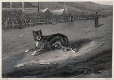 A dog running along a race-course with a crowd looking on. Etching by E. Hacker after E. Wellcome Collection, Mans Best Friend, Crowd, 19th Century, That Look, Racing, Lettering, Dogs, Artwork