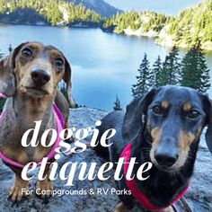 Thinking about taking your furry friend with you on your next adventure? Take a look at these tips so your dog(s) will feel welcome AND welcomed back again! Dog Safety, Camping Games, Dog Wear, Rv Parks, Service Dogs, Family Camping, Dog Harness, Training Your Dog, Hush Hush