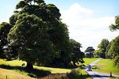 Bride & groom arriving at Markree Castle in a Citroen convertible wedding photography Sligo Wedding Cars, Bride Groom, Convertible, Golf Courses, Castle, Wedding Photography, Infinity Dress, Castles, Wedding Photos