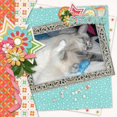 Kits :: My Girl - Kit by Connie Prince My Girl, Tuesday, Decorative Boxes, Prince, Scrap, Layout, Kit, Create, Amazing
