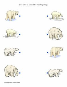 FREE worksheets, create your own worksheets, games. Animal Worksheets, Animal Activities, Free Printable Worksheets, Preschool Worksheets, Preschool Activities, Winter Club, Artic Animals, Polo Norte, Kids Education